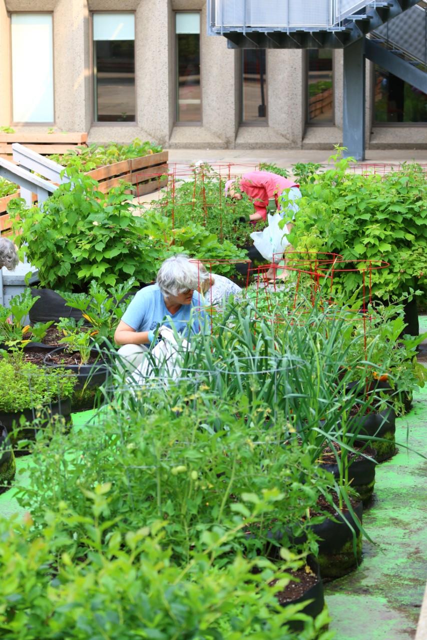 L Agriculture Urbaine D Utopique A Florissante Quebec Hebdo