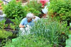 L'agriculture urbaine, d'utopique à florissante