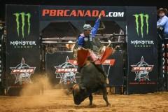 Gestev se lance dans le divertissement avec taureaux