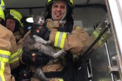 Incendie dans un jumelé: les pompiers réaniment un chat