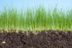 Une belle pelouse sans usage de pesticides, c'est possible