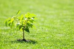 Un arbre gratuit pour chaque citoyen de L'Ancienne-Lorette