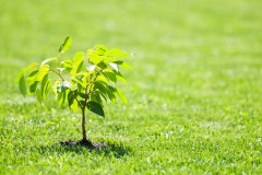 Verdir Québec un arbre à la fois