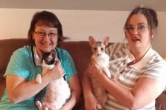 Refuge SaBri: Un futur refuge pour chats sans euthanasie