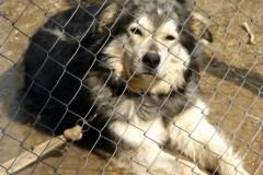 Un couple accusé de cruauté envers un chien