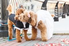 Deux chiens vont se marier à Place de la Cité