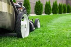 Les bienfaits d'une pelouse saine