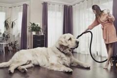 Conseils de nettoyage pour les propriétaires d'animaux de compagnie