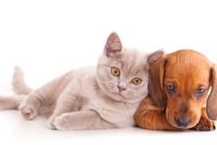 Les chiens et les chats sont-ils daltoniens?